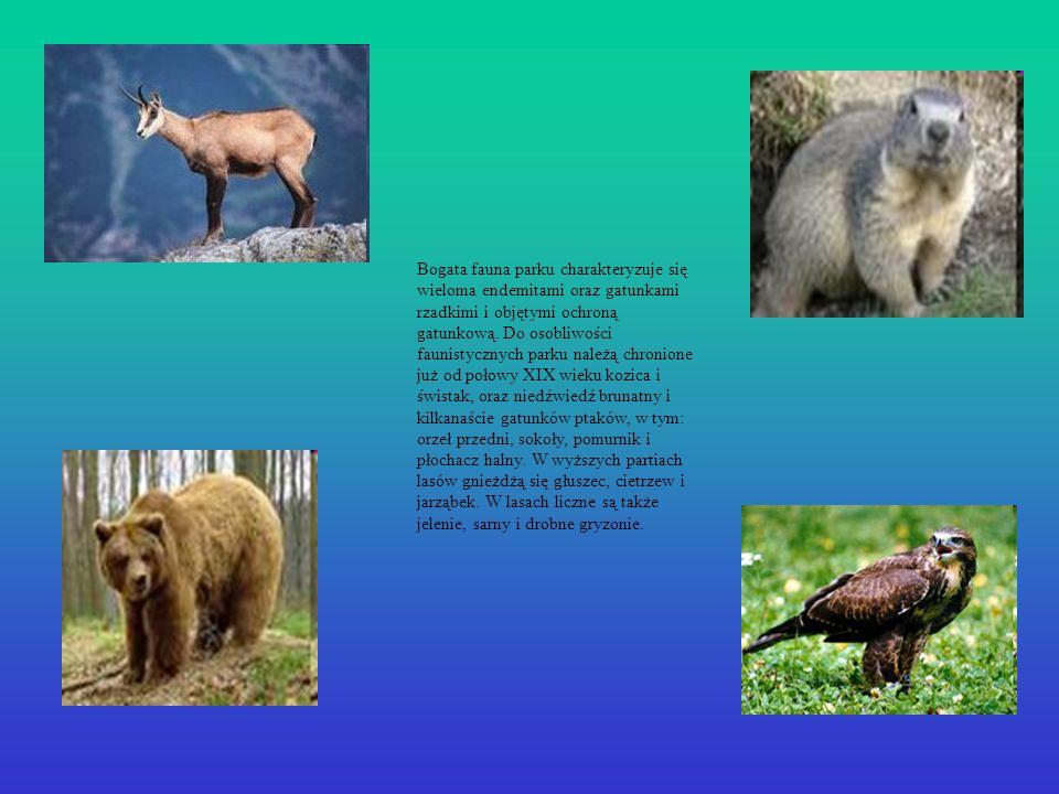 Bogata fauna parku charakteryzuje się wieloma endemitami oraz gatunkami rzadkimi i objętymi ochroną gatunkową. Do osobliwości faunistycznych parku nal