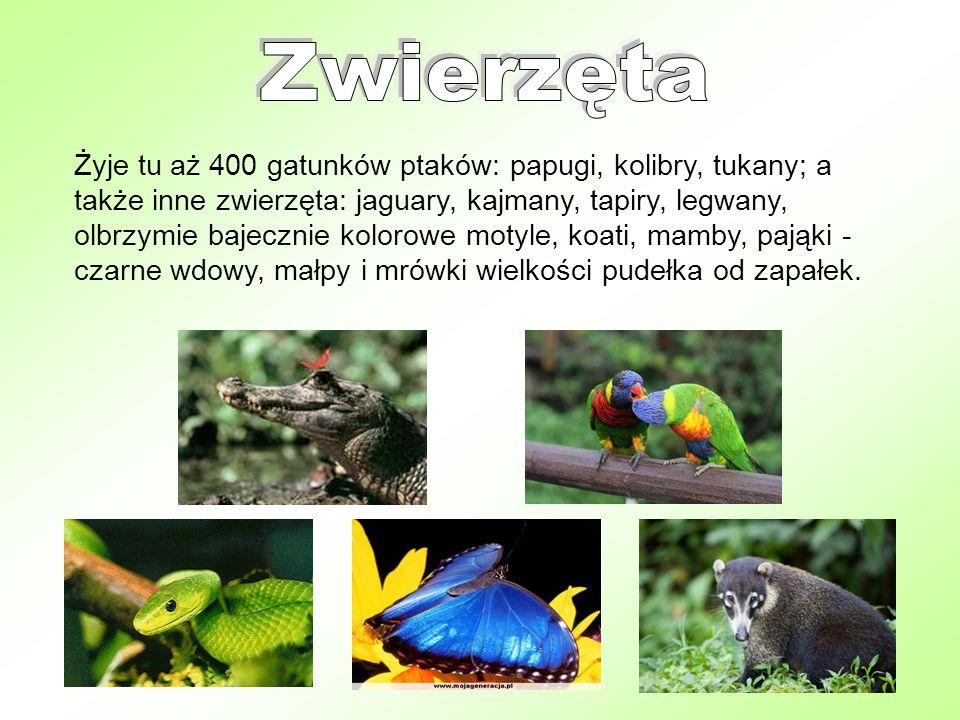 Żyje tu aż 400 gatunków ptaków: papugi, kolibry, tukany; a także inne zwierzęta: jaguary, kajmany, tapiry, legwany, olbrzymie bajecznie kolorowe motyl
