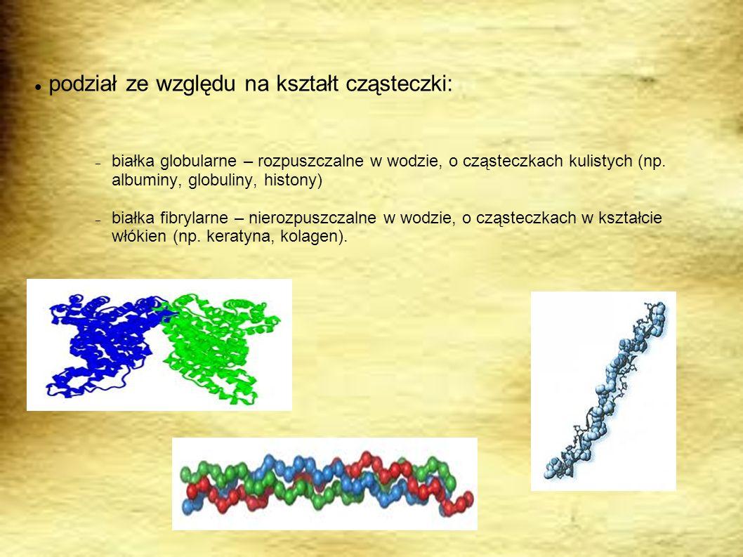 podział ze względu na kształt cząsteczki: – białka globularne – rozpuszczalne w wodzie, o cząsteczkach kulistych (np. albuminy, globuliny, histony) –