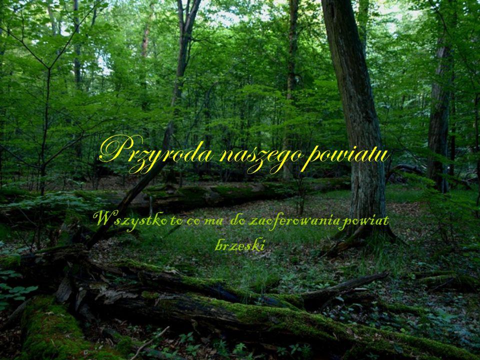 Przyroda naszego powiatu Wszystko to co ma do zaoferowania powiat brzeski