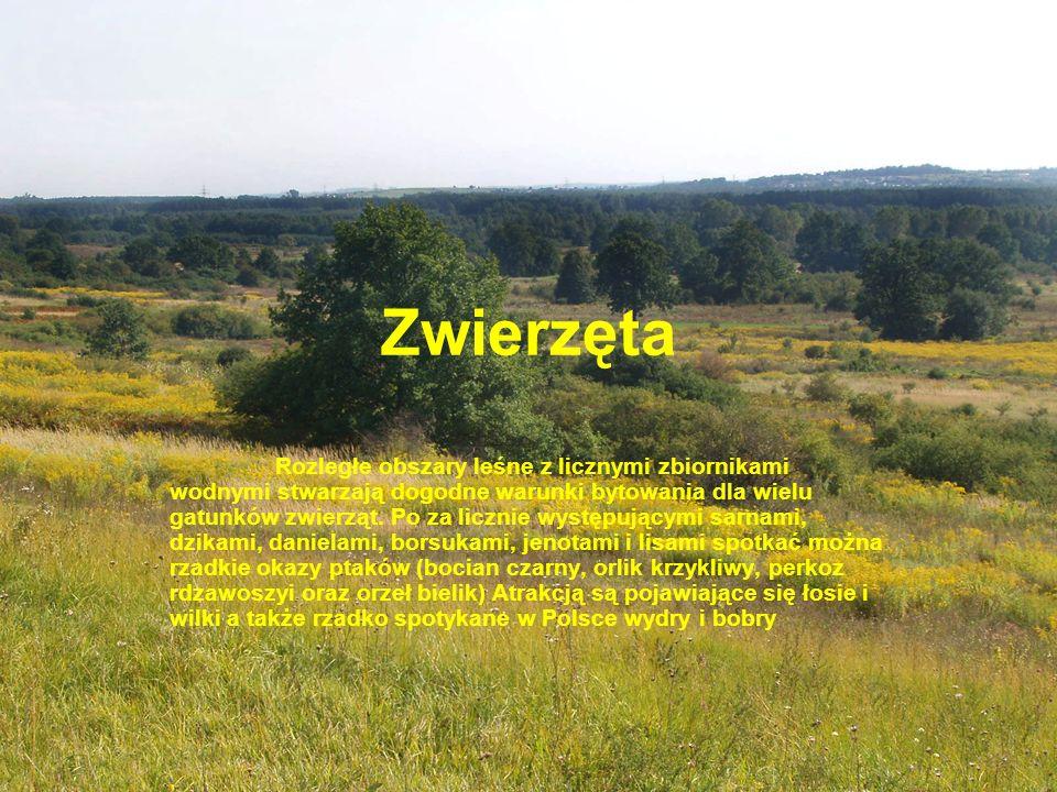 Zwierzęta Rozległe obszary leśne z licznymi zbiornikami wodnymi stwarzają dogodne warunki bytowania dla wielu gatunków zwierząt. Po za licznie występu