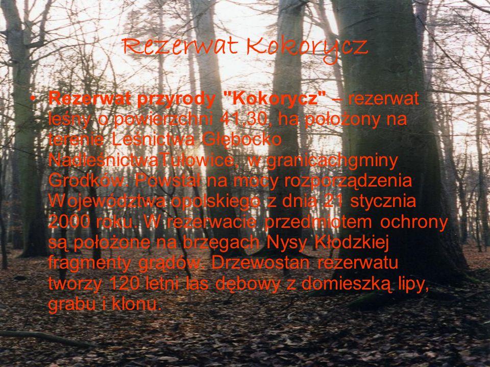 Rezerwat Dębina Rezerwat przyrody Dębina rezerwat przyrody na terenie leśnym w rejonie wsi Głębocko i Kopice nad rzeką Nysą kłodzką, utworzony z dniem 10 stycznia 2000 roku decyzją Wojewody opolskiego.