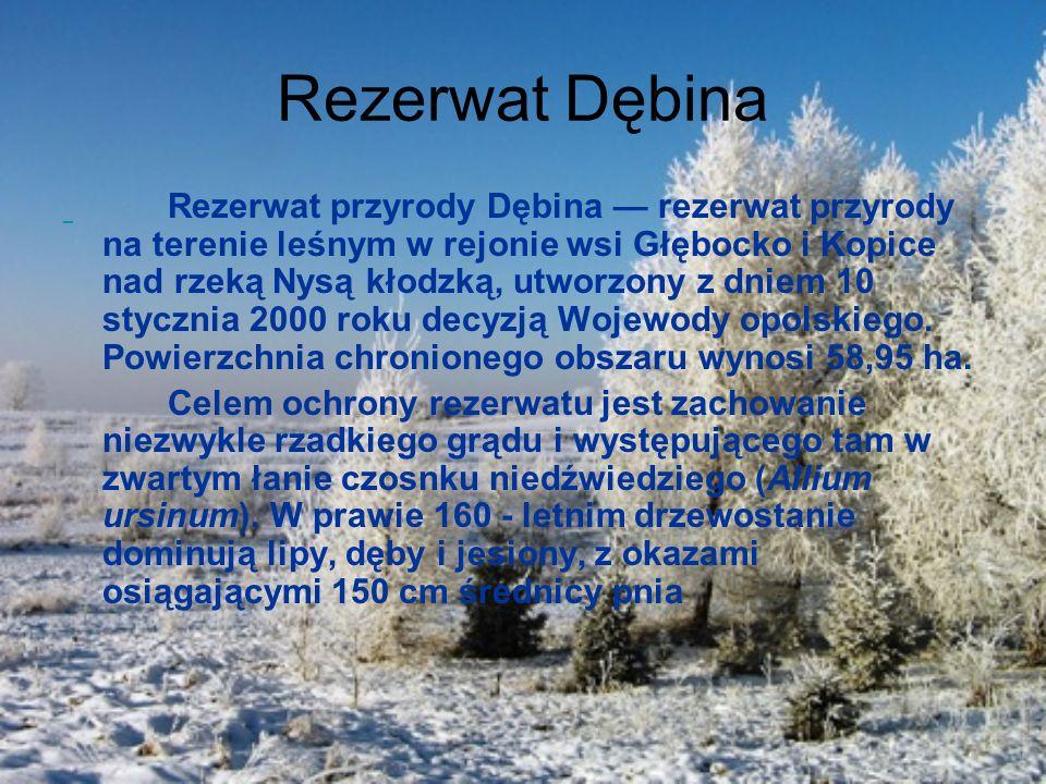 Rezerwat Dębina Rezerwat przyrody Dębina rezerwat przyrody na terenie leśnym w rejonie wsi Głębocko i Kopice nad rzeką Nysą kłodzką, utworzony z dniem