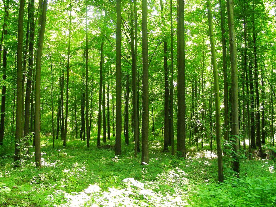 Stobrawki park Krajobrazowy Stobrawski Park Krajobrazowy – park krajobrazowy założony 28 września 1999 r.