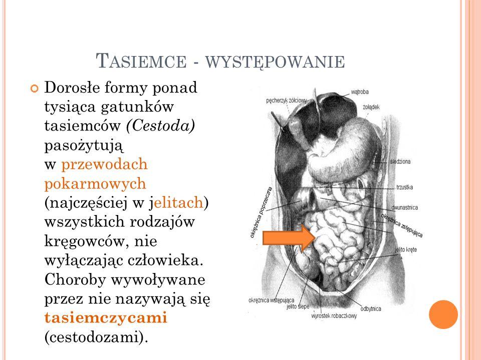 T ASIEMCE - WYSTĘPOWANIE Dorosłe formy ponad tysiąca gatunków tasiemców (Cestoda) pasożytują w przewodach pokarmowych (najczęściej w jelitach) wszystk