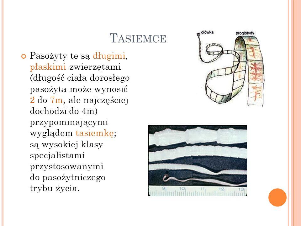 M ORFOLOGIA I ANATOMIA Ciało tasiemców nosi nazwę strobilum (strobila).