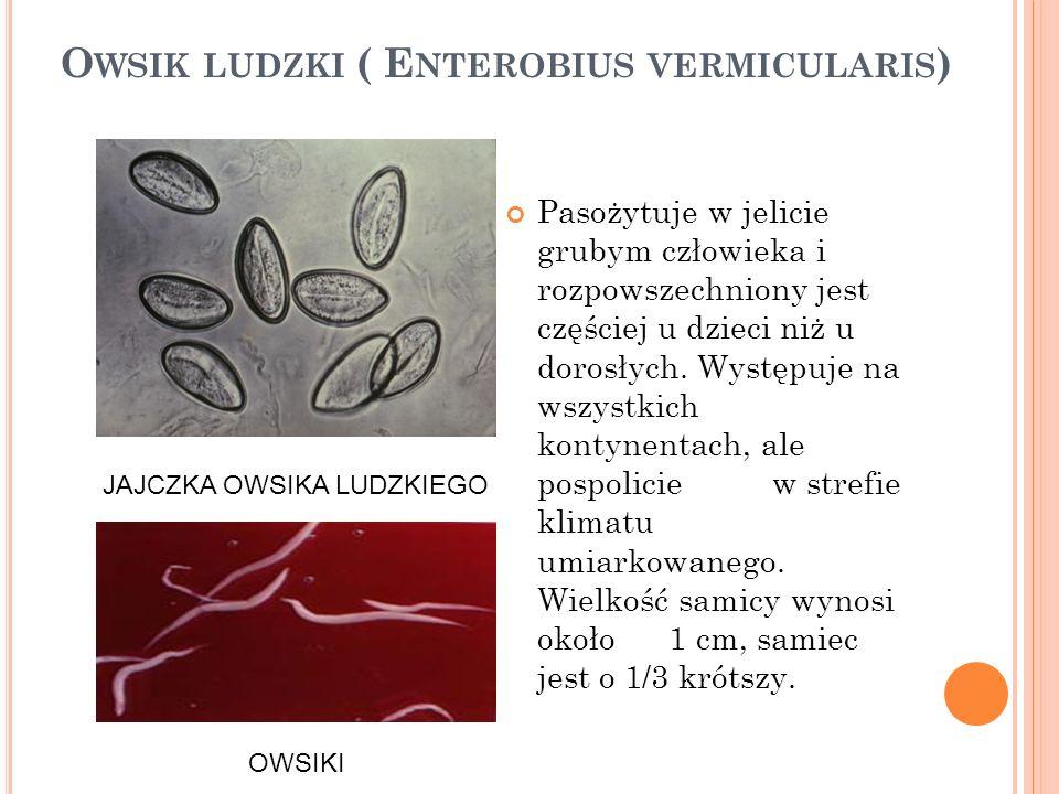 S POSÓB ZARAŻANIA SIĘ Przy braku przestrzegania higieny zarażenie jest bardzo łatwe (następuje w wyniku połknięcia jaj pasożyta).