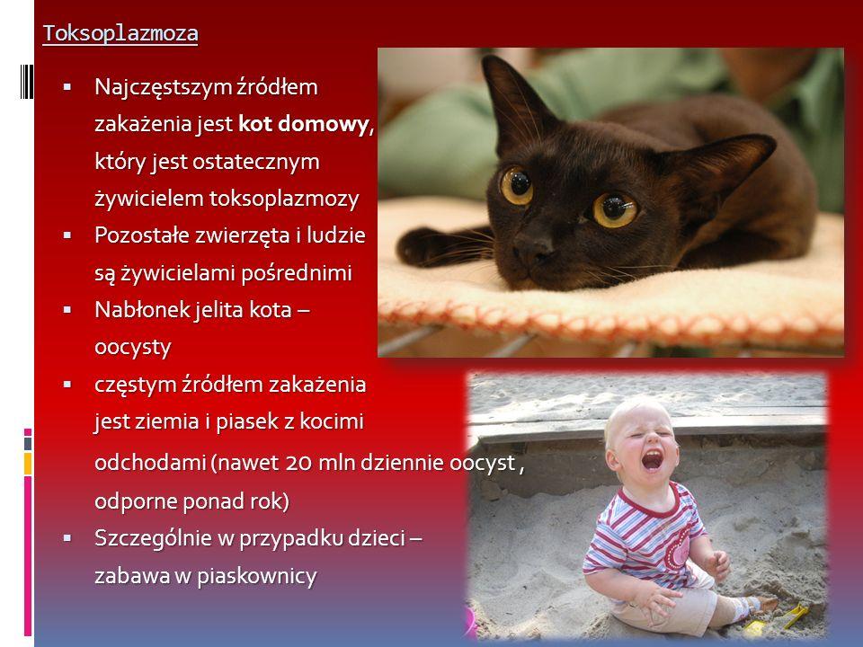 Toksoplazmoza Najczęstszym źródłem Najczęstszym źródłem zakażenia jest kot domowy, który jest ostatecznym żywicielem toksoplazmozy Pozostałe zwierzęta i ludzie Pozostałe zwierzęta i ludzie są żywicielami pośrednimi Nabłonek jelita kota – Nabłonek jelita kota –oocysty częstym źródłem zakażenia częstym źródłem zakażenia jest ziemia i piasek z kocimi odchodami (nawet 20 mln dziennie oocyst, odporne ponad rok) Szczególnie w przypadku dzieci – Szczególnie w przypadku dzieci – zabawa w piaskownicy