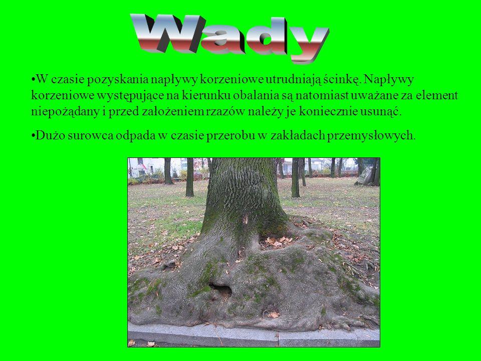 To podłużne wypukłości w odziomkowej części drewna okrągłego, ciągnące się od korzeni i znikające ku górze drzewa. W napływach korzeniowych odziomkowe