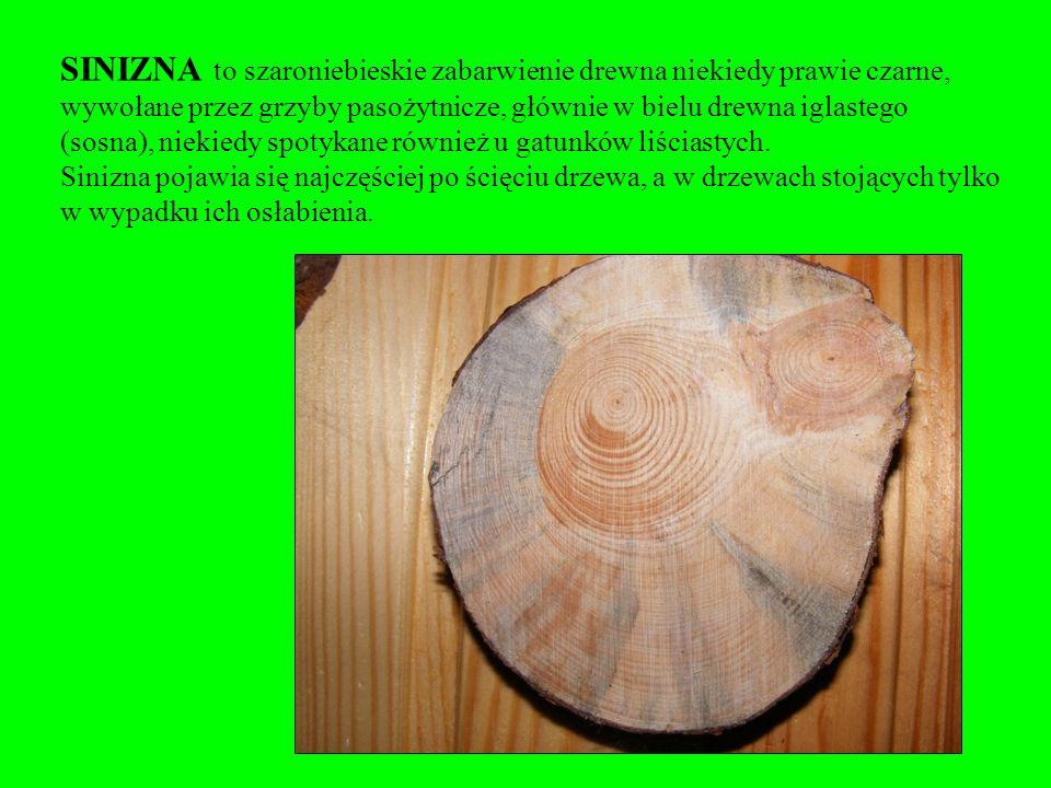 W krajach Europy Zachodniej i Północnej siniznę uważa się często za cechę korzystną np. w boazeriach.