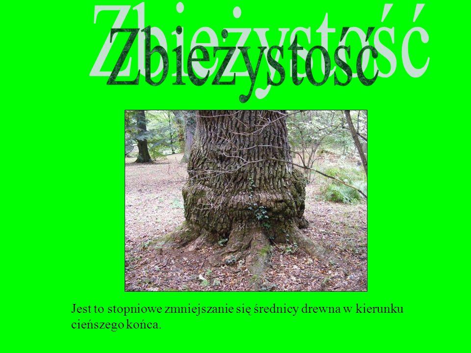 SINIZNA to szaroniebieskie zabarwienie drewna niekiedy prawie czarne, wywołane przez grzyby pasożytnicze, głównie w bielu drewna iglastego (sosna), ni