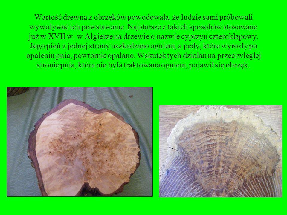 Surowiec z tą wadą jest poszukiwany ze względu na dekoracyjny (zawiły układ włókien) wygląd drewna. Szczególnie obrzęki na brzozie, zwane czeczotą, cz