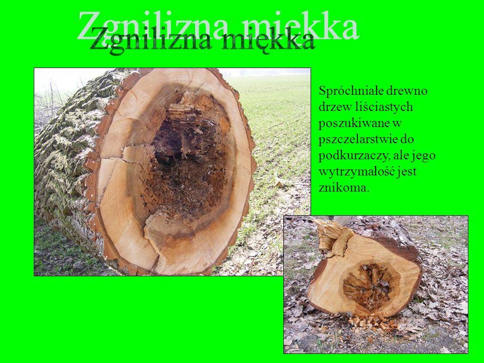 W drewnie konstrukcyjnym i sklejkowym obrzęk, z uwagi na nieprawidłowy układ włókien, jest uważany za dużą wadę, ponieważ zmniejsza wytrzymałość mecha