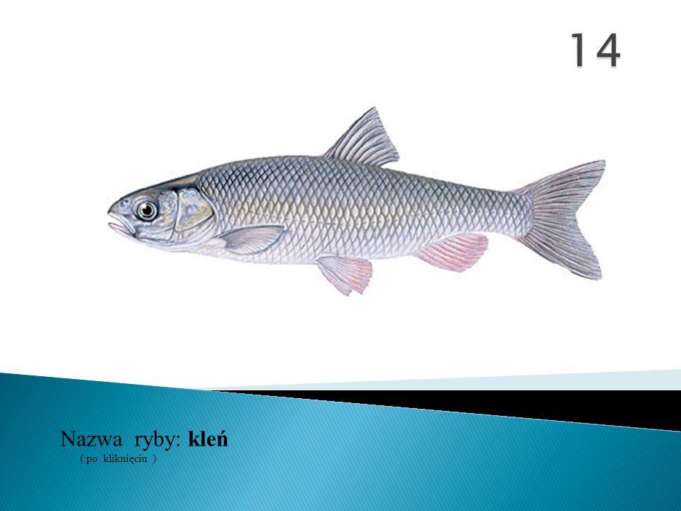Nazwa ryby: ( po kliknięciu ) kleń