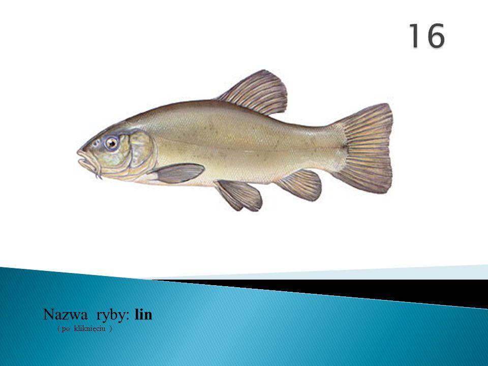 Nazwa ryby: ( po kliknięciu ) lin