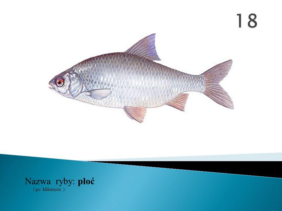 Nazwa ryby: ( po kliknięciu ) płoć