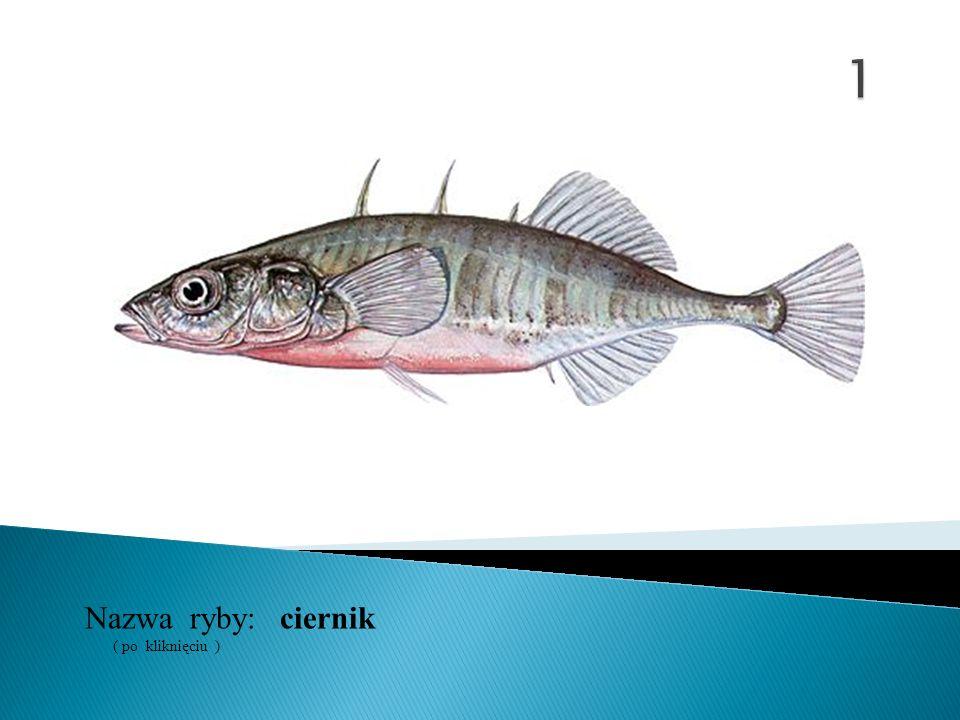 ciernikNazwa ryby: ( po kliknięciu )