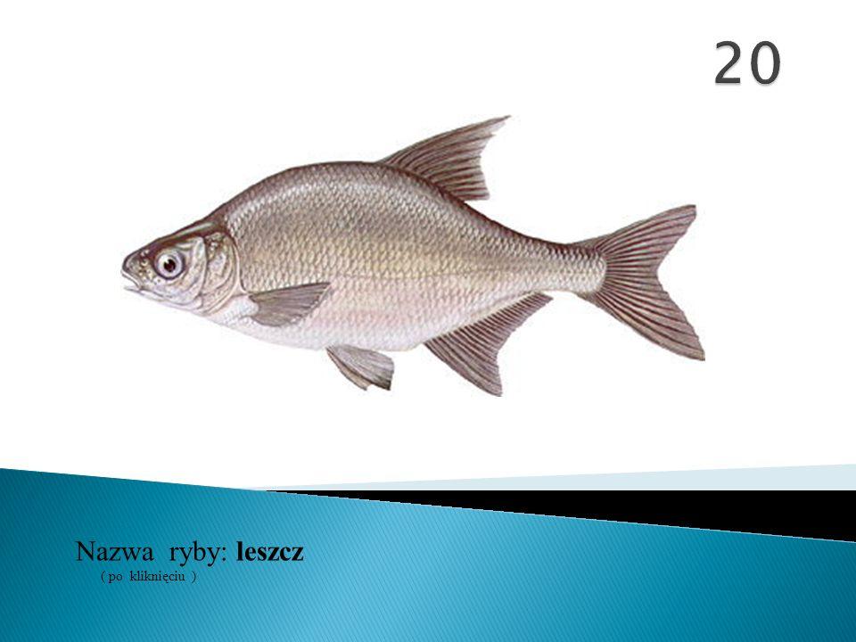 Nazwa ryby: ( po kliknięciu ) leszcz