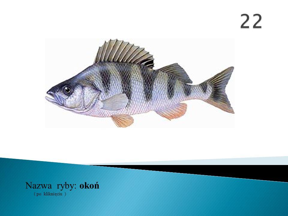 Nazwa ryby: ( po kliknięciu ) okoń
