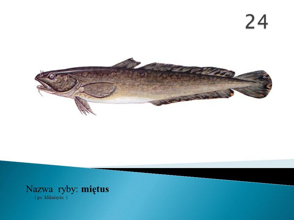 Nazwa ryby: ( po kliknięciu ) miętus