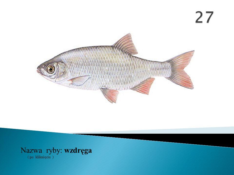 Nazwa ryby: ( po kliknięciu ) wzdręga
