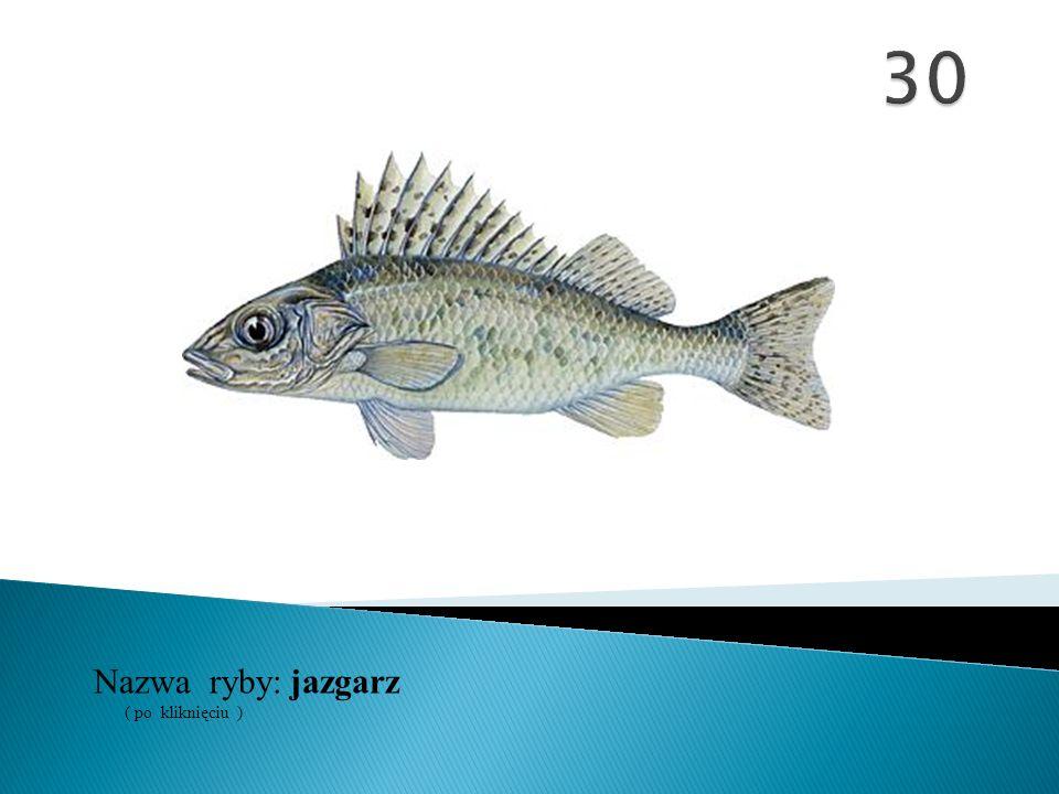 Nazwa ryby: ( po kliknięciu ) jazgarz