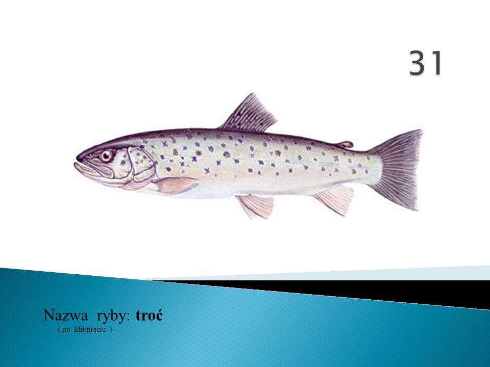 Nazwa ryby: ( po kliknięciu ) troć