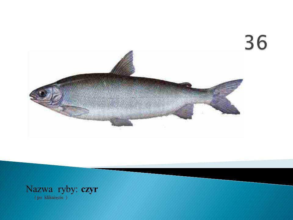 Nazwa ryby: ( po kliknięciu ) czyr