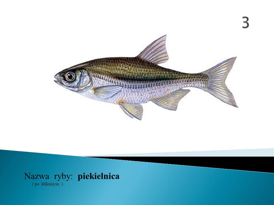 Nazwa ryby: ( po kliknięciu ) minóg