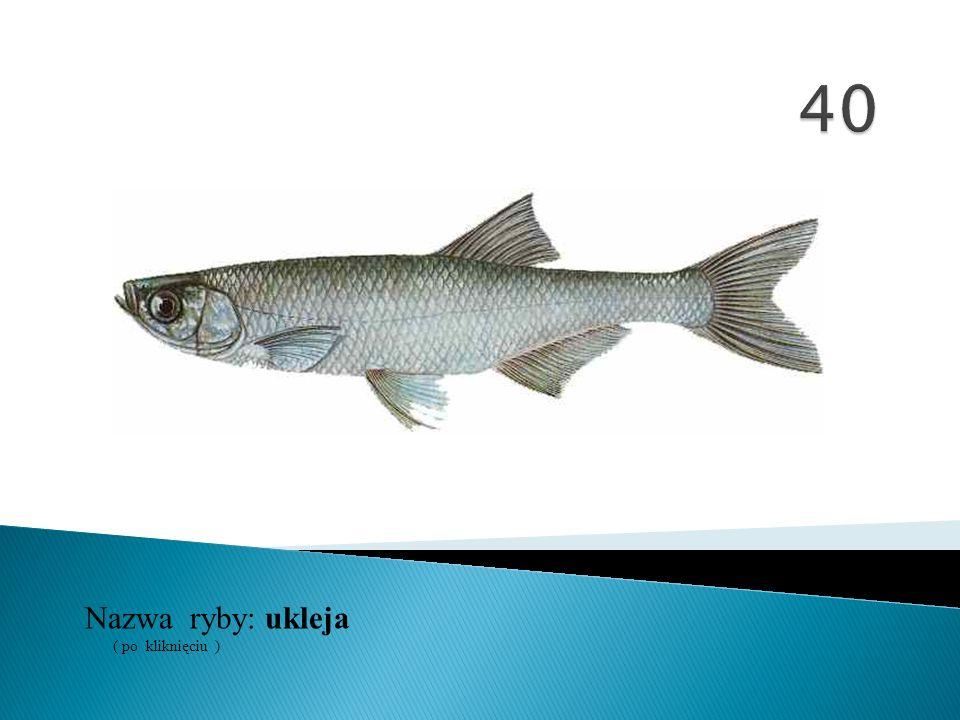 Nazwa ryby: ( po kliknięciu ) ukleja