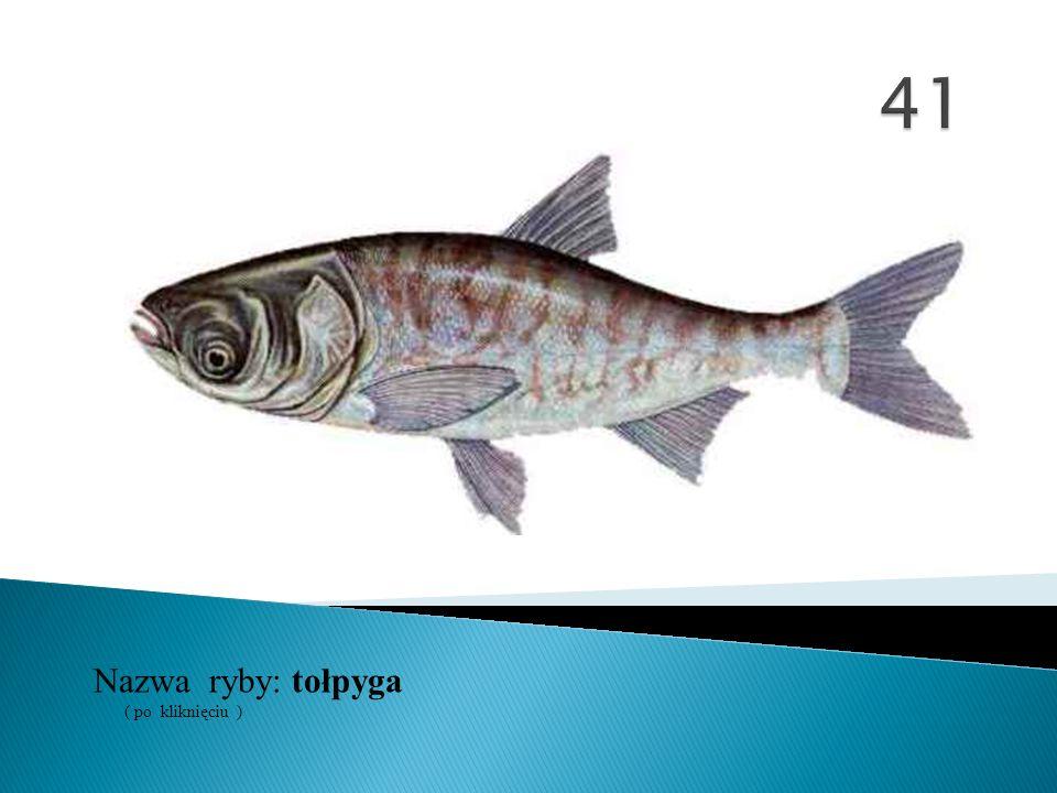 Nazwa ryby: ( po kliknięciu ) tołpyga