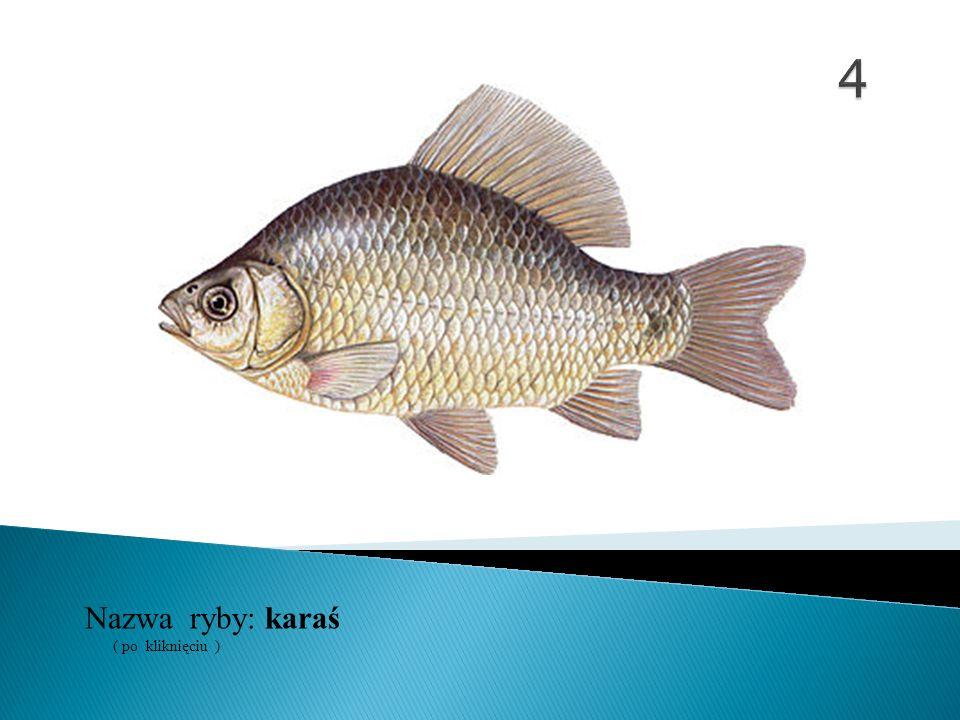 Nazwa ryby: ( po kliknięciu ) karaś