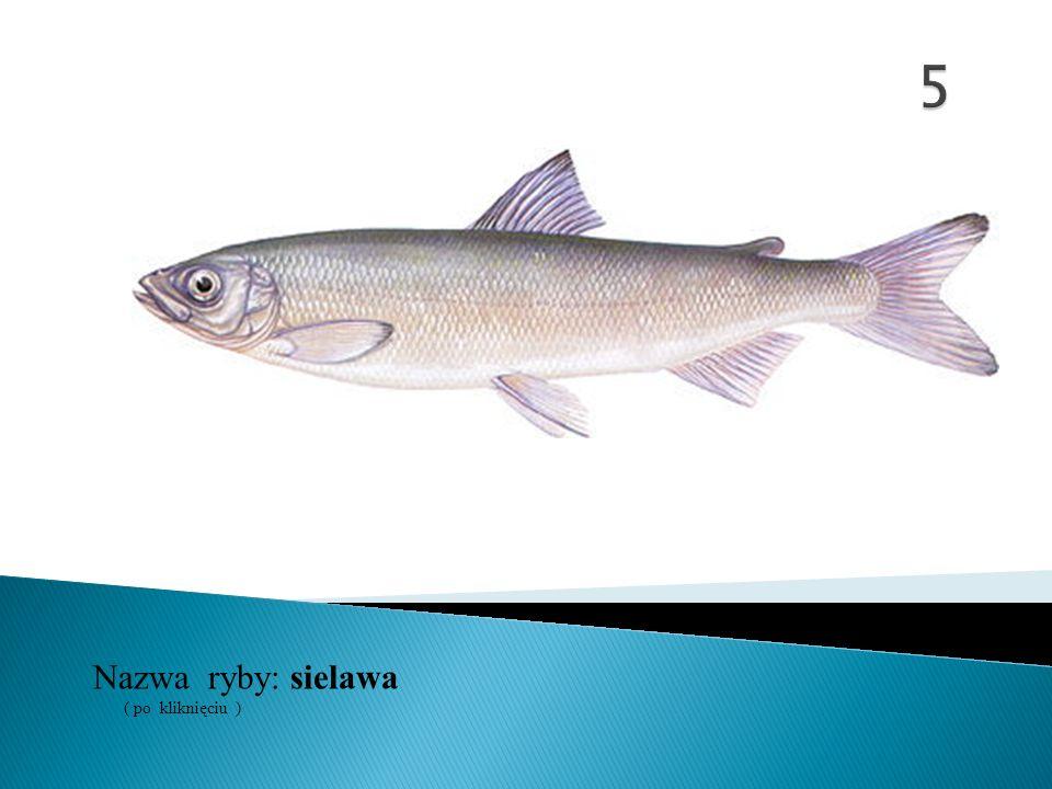 Nazwa ryby: ( po kliknięciu ) jelec