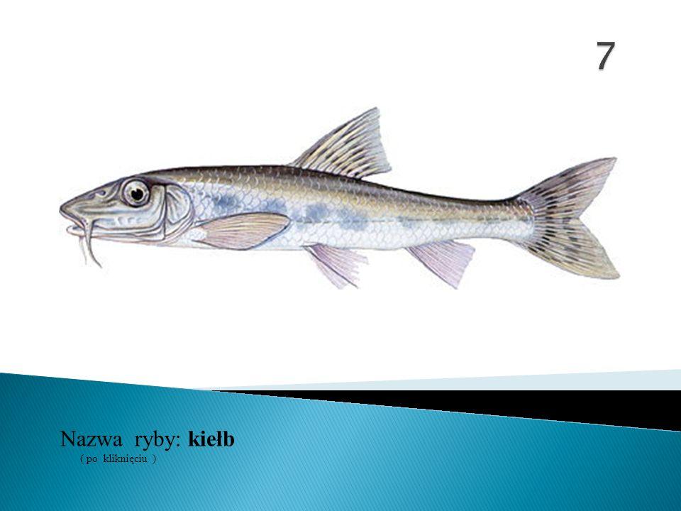 Nazwa ryby: ( po kliknięciu ) kiełb