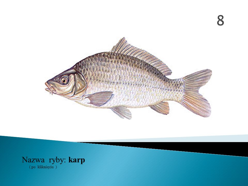 Nazwa ryby: ( po kliknięciu ) karp