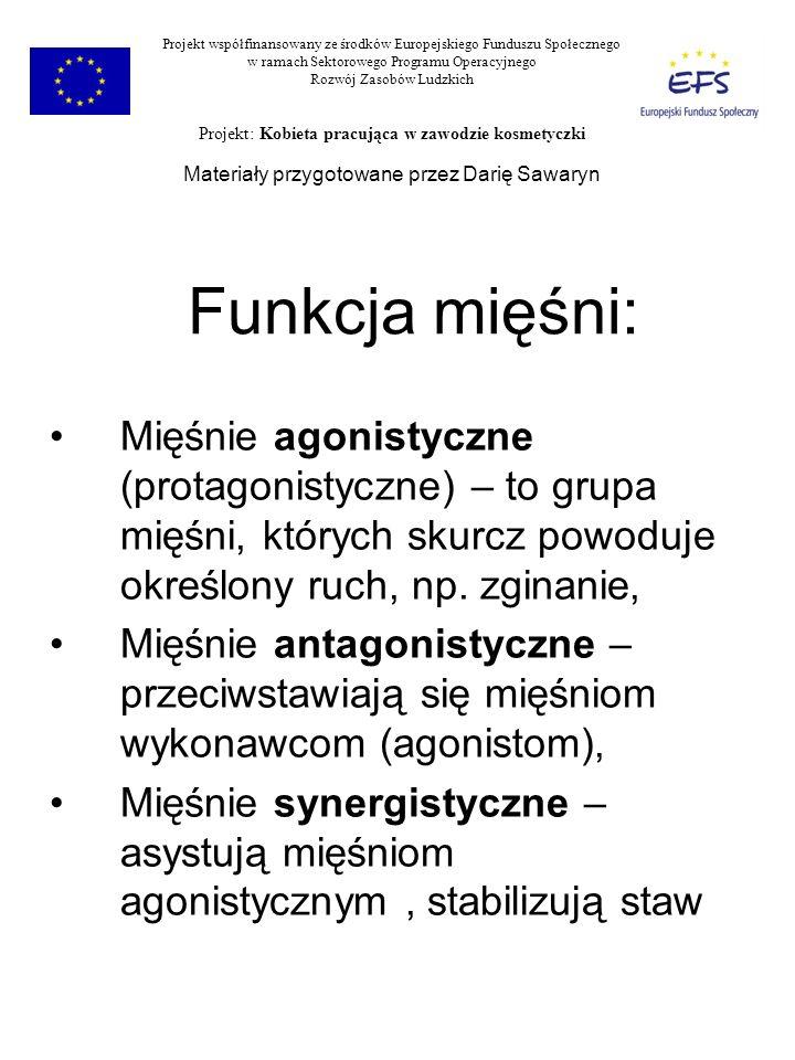 Funkcja mięśni: Mięśnie agonistyczne (protagonistyczne) – to grupa mięśni, których skurcz powoduje określony ruch, np. zginanie, Mięśnie antagonistycz