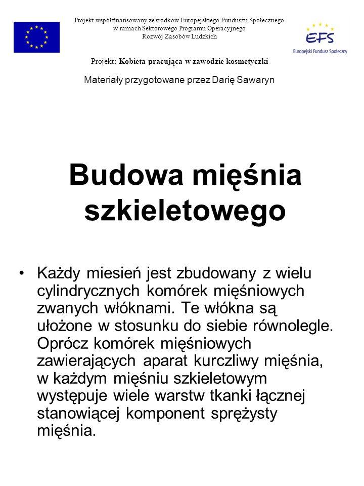 Mięśnie człowieka Zawierają włókna FT i ST Projekt współfinansowany ze środków Europejskiego Funduszu Społecznego w ramach Sektorowego Programu Operacyjnego Rozwój Zasobów Ludzkich Projekt: Kobieta pracująca w zawodzie kosmetyczki Materiały przygotowane przez Darię Sawaryn