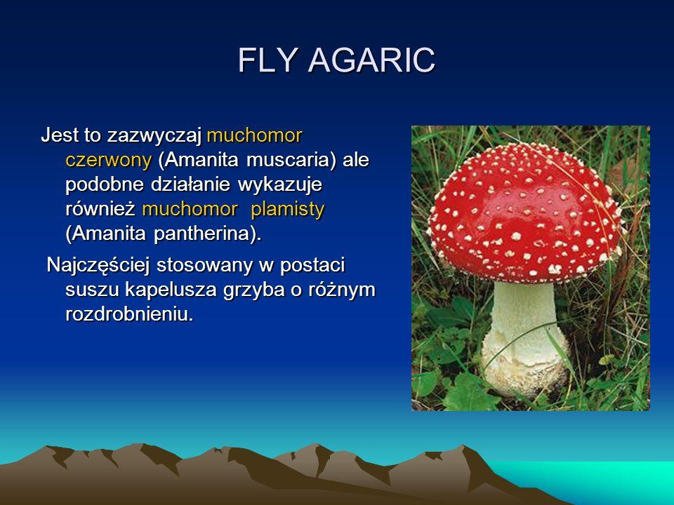 FLY AGARIC Jest to zazwyczaj muchomor czerwony (Amanita muscaria) ale podobne działanie wykazuje również muchomor plamisty (Amanita pantherina).