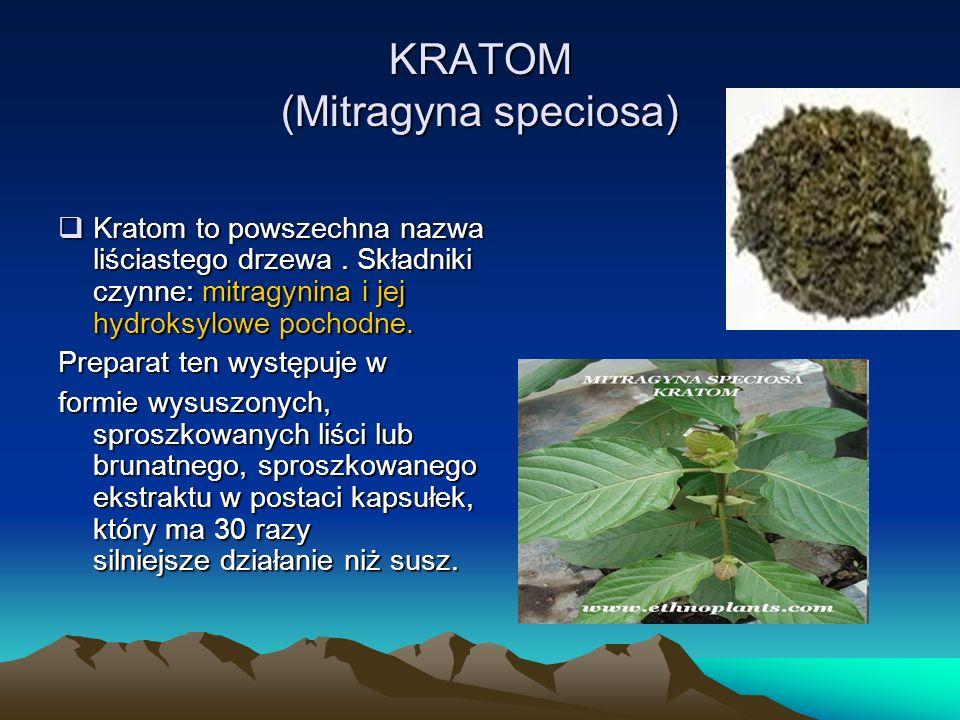 KRATOM (Mitragyna speciosa) Kratom to powszechna nazwa liściastego drzewa.