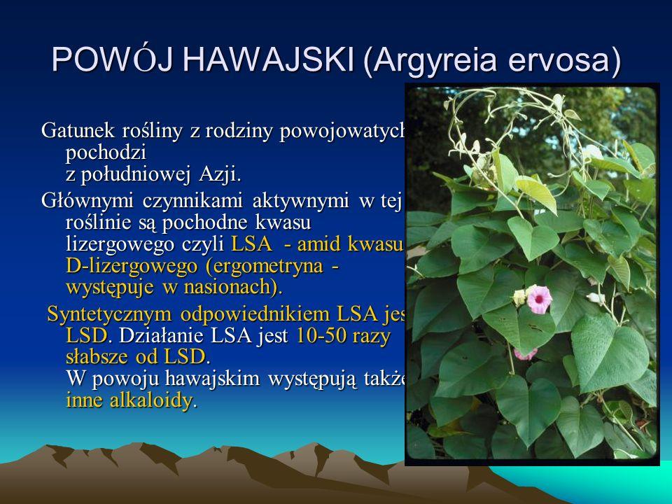 POW Ó J HAWAJSKI (Argyreia ervosa) Gatunek rośliny z rodziny powojowatych, pochodzi z południowej Azji.