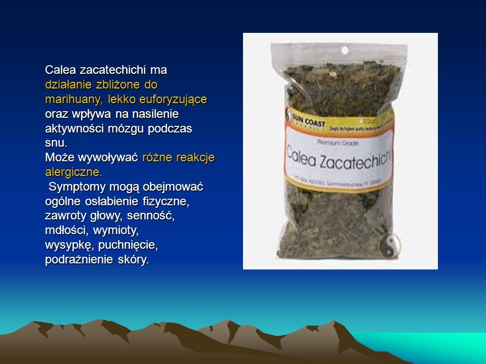 Calea zacatechichi ma działanie zbliżone do marihuany, lekko euforyzujące oraz wpływa na nasilenie aktywności mózgu podczas snu.