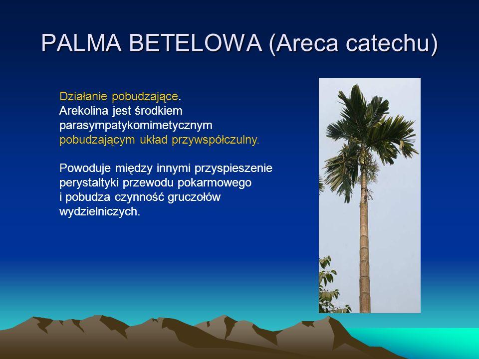 PALMA BETELOWA (Areca catechu) Działanie pobudzające.