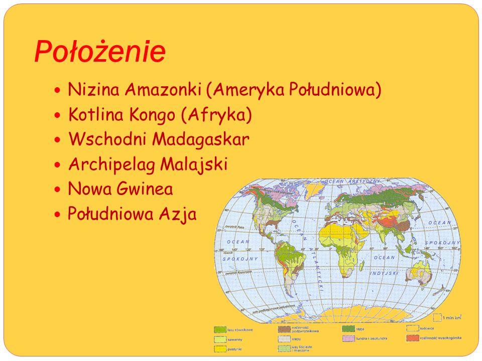 Położenie Nizina Amazonki (Ameryka Południowa) Kotlina Kongo (Afryka) Wschodni Madagaskar Archipelag Malajski Nowa Gwinea Południowa Azja