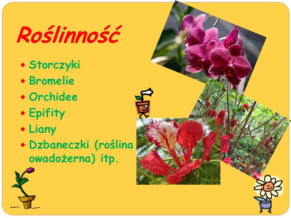 Roślinność Storczyki Bromelie Orchidee Epifity Liany Dzbaneczki (roślina owadożerna) itp.