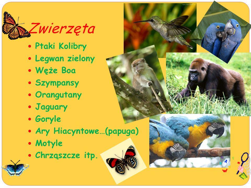 Zwierzęta Ptaki Kolibry Legwan zielony Węże Boa Szympansy Orangutany Jaguary Goryle Ary Hiacyntowe…(papuga) Motyle Chrząszcze itp.