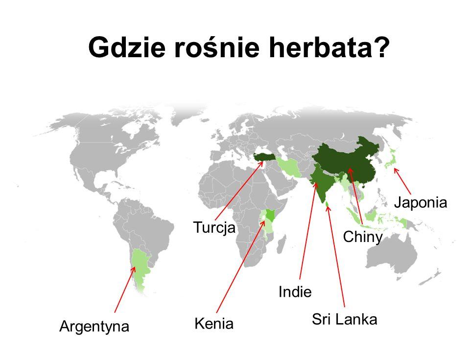 Gdzie rośnie herbata? Japonia Chiny Indie Sri Lanka Turcja Argentyna Kenia