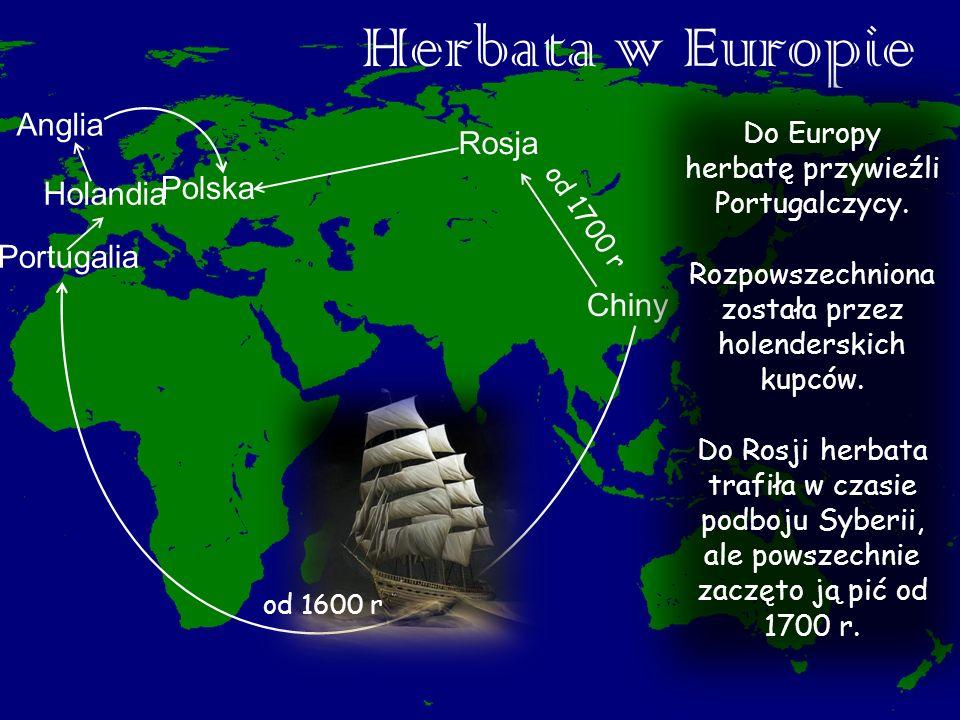 Herbata w Europie Chiny Polska Anglia Holandia Rosja Portugalia od 1600 r od 1700 r Do Europy herbatę przywieźli Portugalczycy. Rozpowszechniona zosta