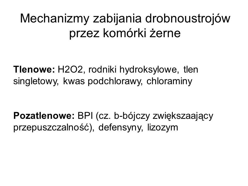 Mechanizmy zabijania drobnoustrojów przez komórki żerne Tlenowe: H2O2, rodniki hydroksylowe, tlen singletowy, kwas podchlorawy, chloraminy Pozatlenowe