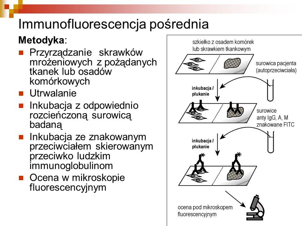 Immunofluorescencja pośrednia Metodyka: Przyrządzanie skrawków mrożeniowych z pożądanych tkanek lub osadów komórkowych Utrwalanie Inkubacja z odpowied