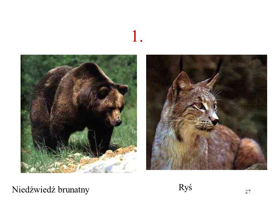 26 1.Jakie to zwierzę? A B